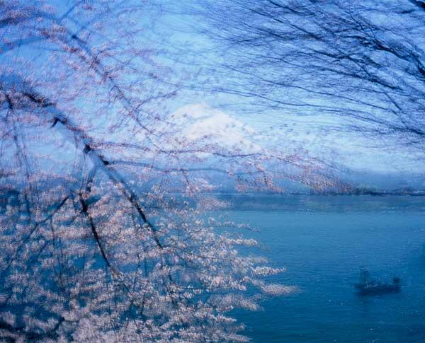 Yamanakako Sakura