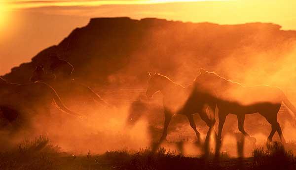 Dust Shadows At Dawn