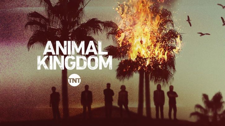 PSM Animal Kingdom promo.jpg