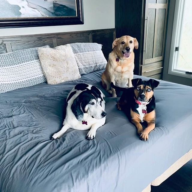 Shout out to my three lil ladies on #nationalrescuedogday . From left to right, Beulah June, Hannah & Annalee. I sure am lucky to have you crazy dogs.