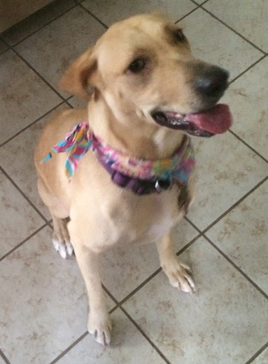 Hayle - Hayle turned out to be allergic to grass. She was adopted by a military family.