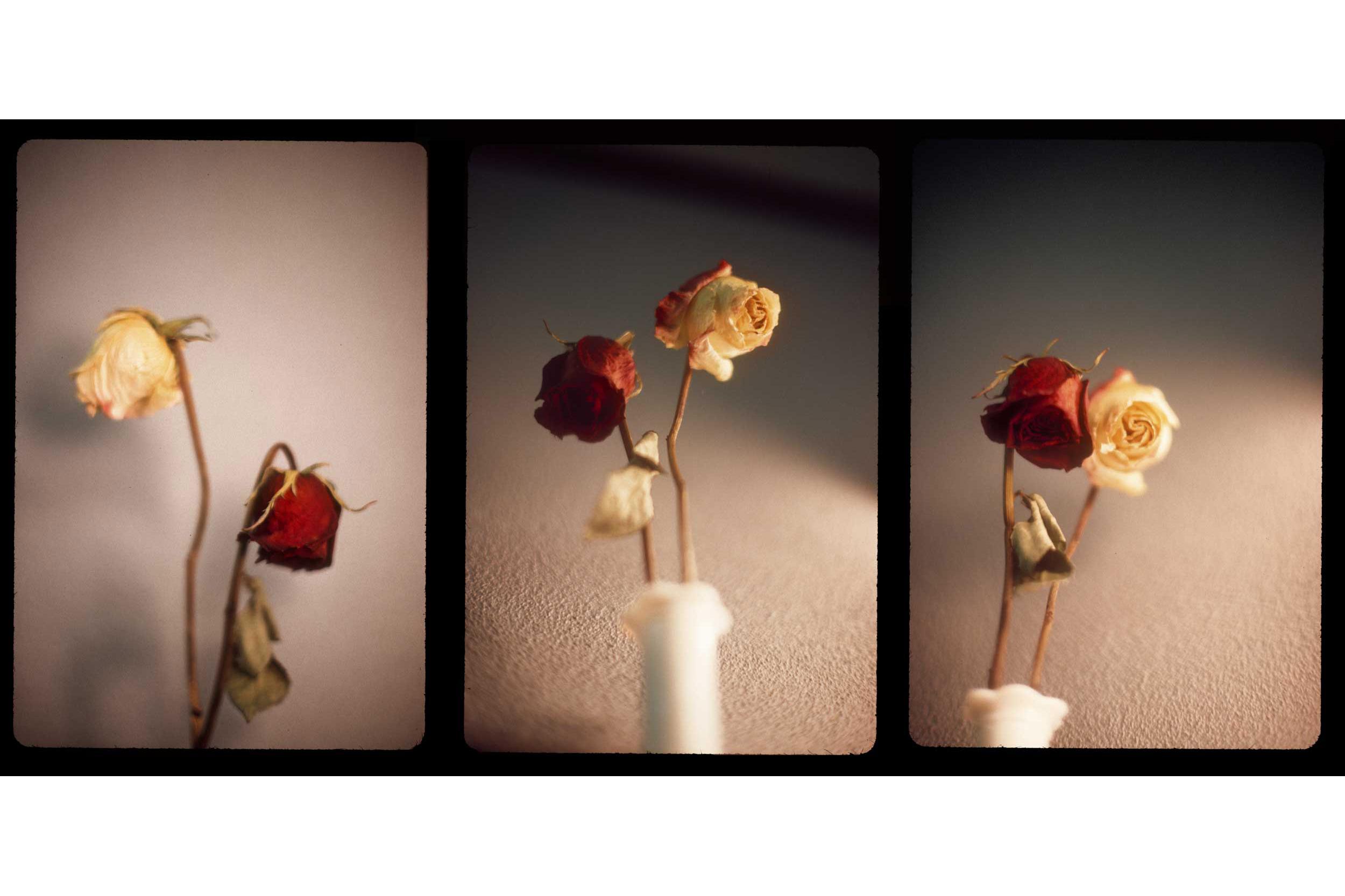 <br><br><br>Triptych in Kodachrome