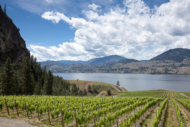 Photos Courtesy of British Columbia Wine Institute and Chris Mason Stearns