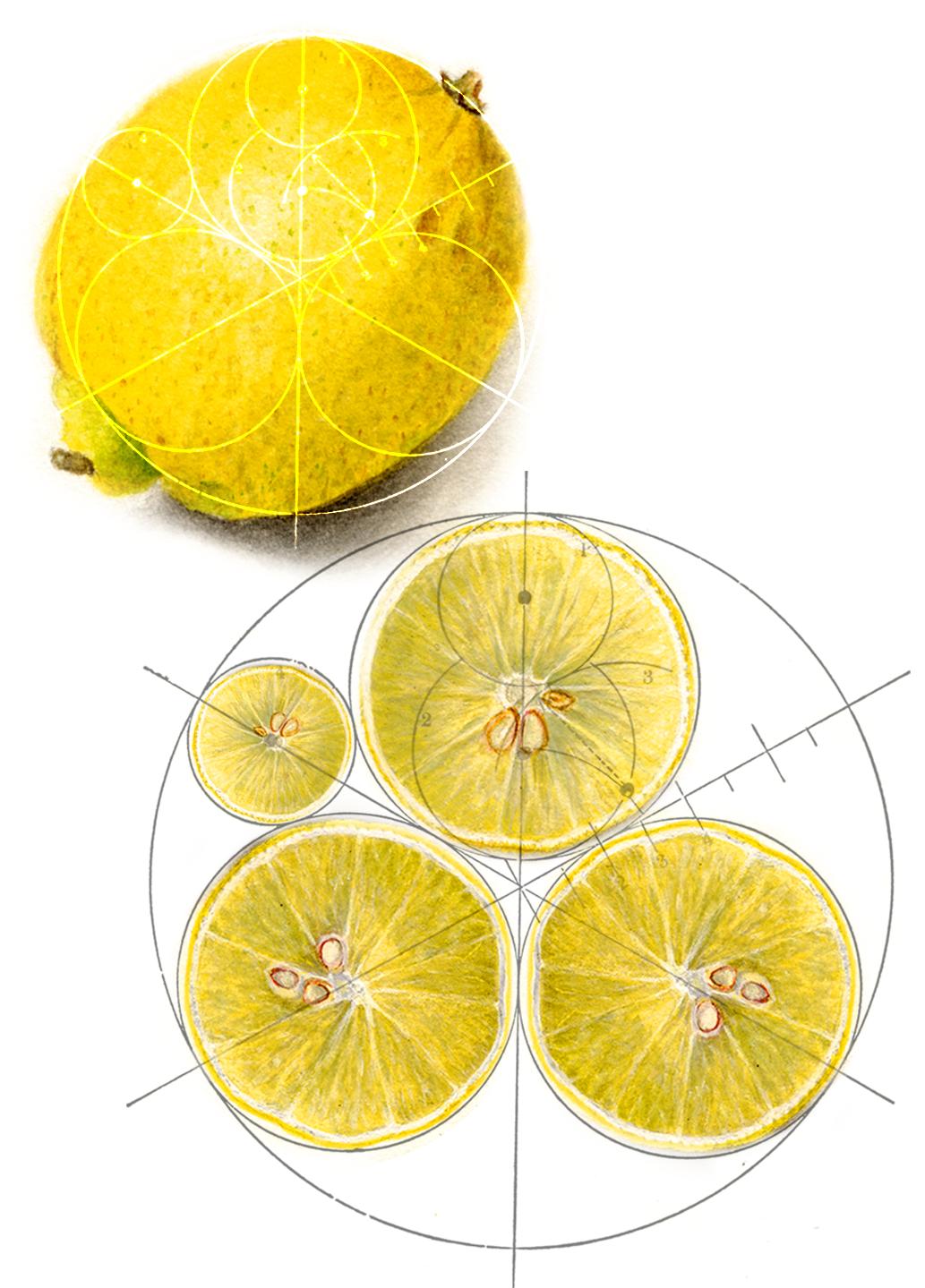 LemonGraph.png