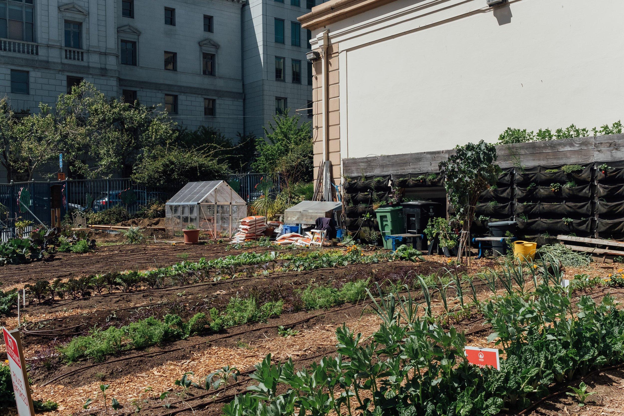 People's Garden.jpg