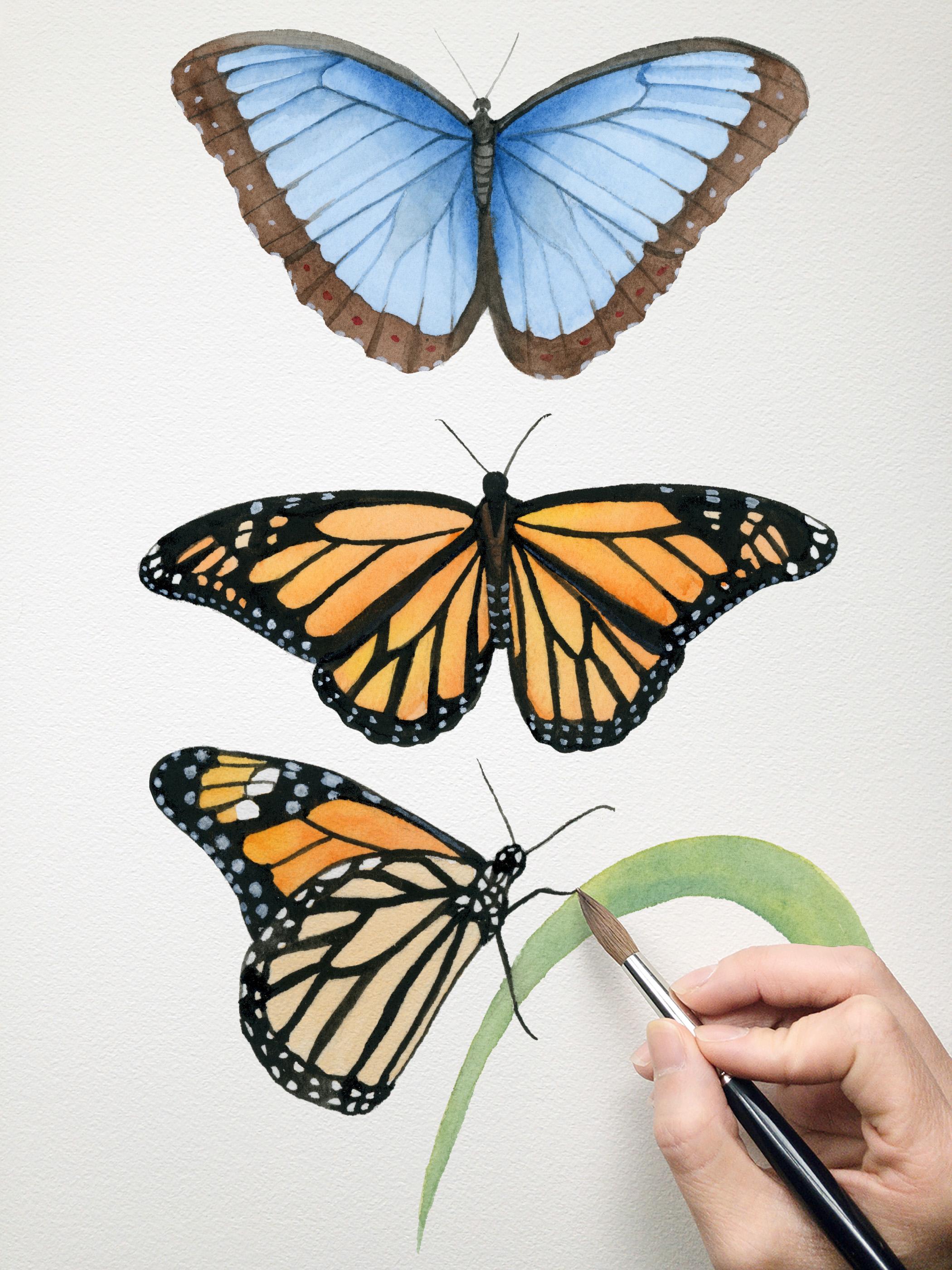 Watercolor Butterfly Class.jpg