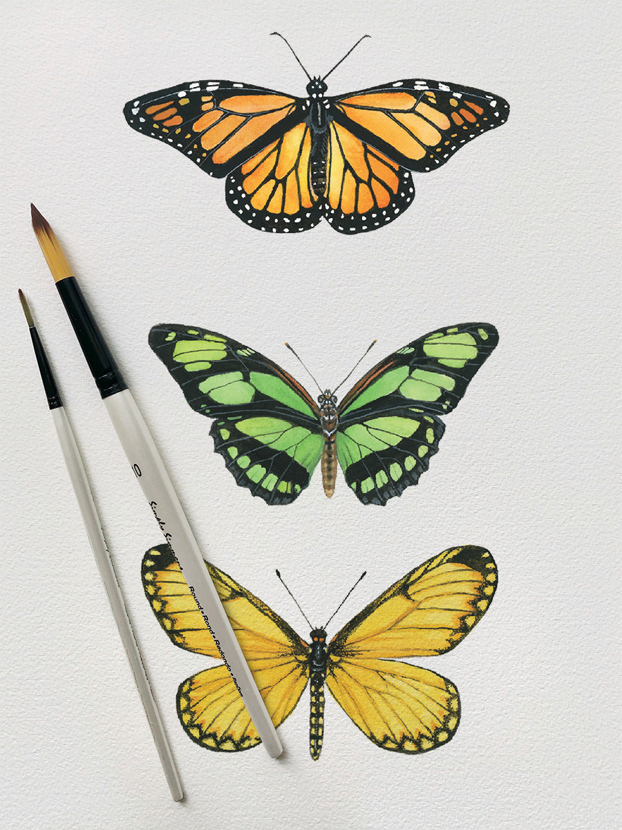 Watercolor Butterfly Workshop1.jpg