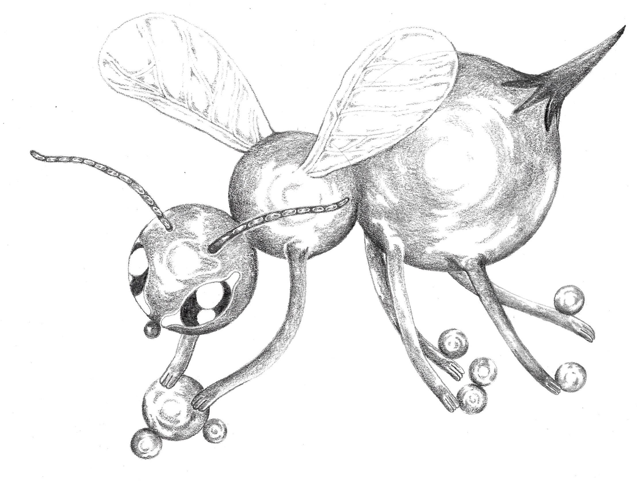 """- Pollen Collectorgraphite7.75x6""""2019"""