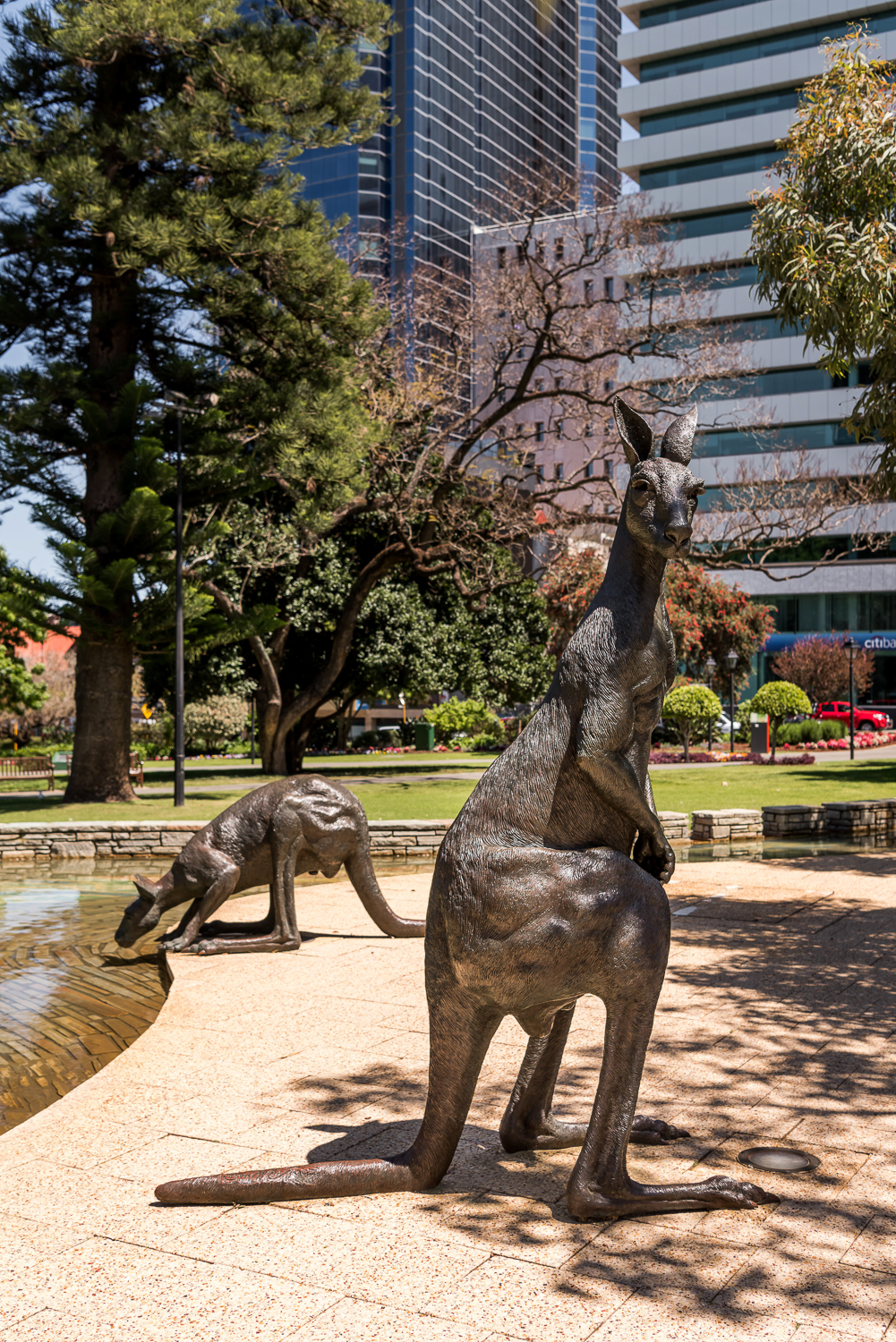 Kangaroos on the Terrace (1997) - Artists Joan Walsh-Smith and Charles SmithCnr Barrack Street and St George's Terrace, PerthThese seven bronze statues of life sized kangaroos are said to represent a mob of kangaroos who have been lazily feeding, but are then startled by the traffic and are about to take off and bounce away down the terrace.This public artwork gives visitors a reason to pause, to consider the contrasting busyness of the city and the peacefulness of the Stirling Gardens, and how we like the kangaroos are caught in between.