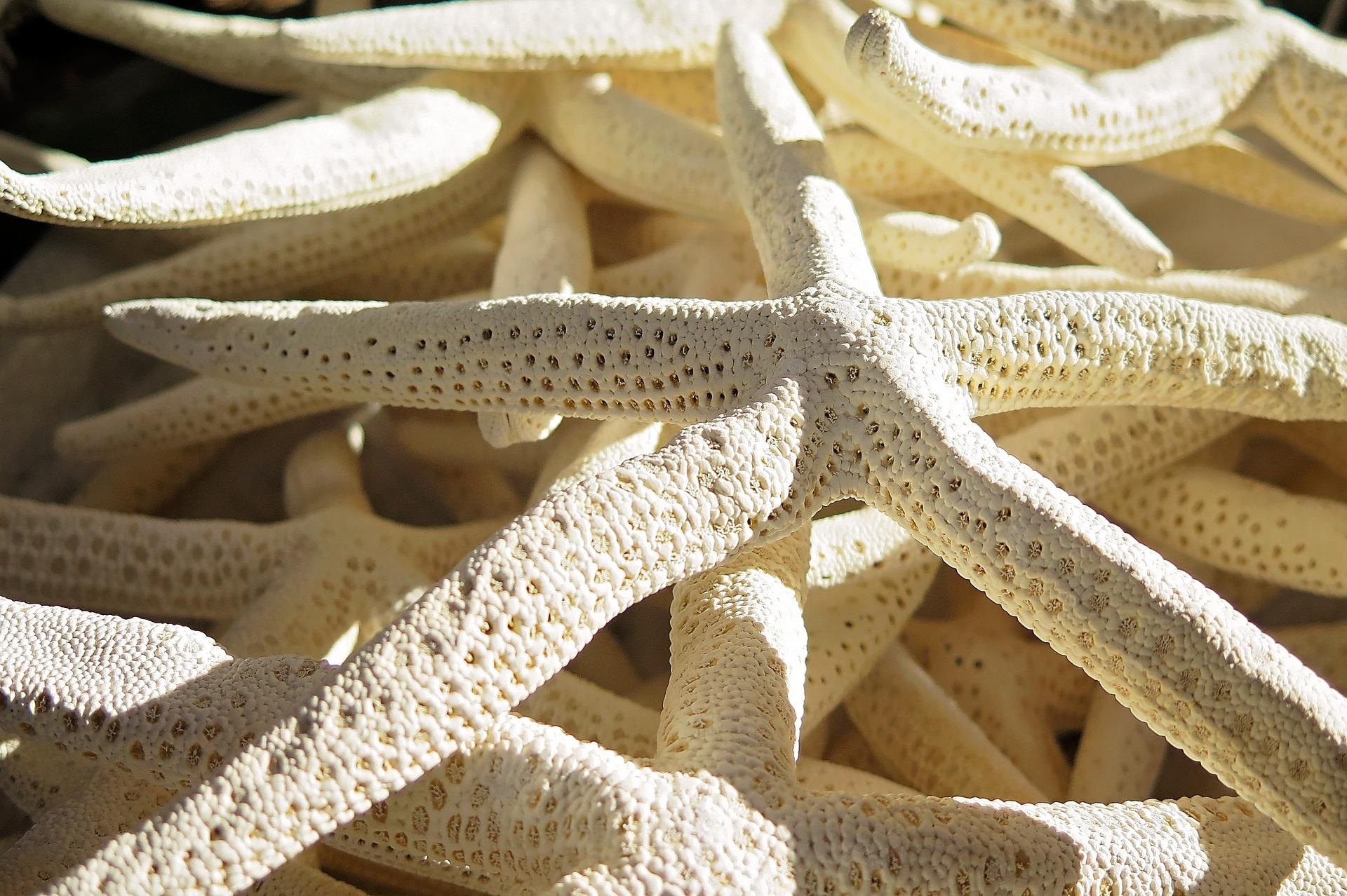 starfish-2064615_1920.jpg
