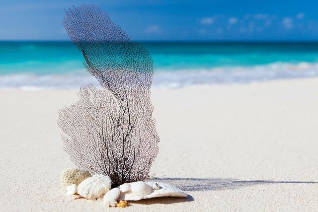 beach-84565_1920.jpeg