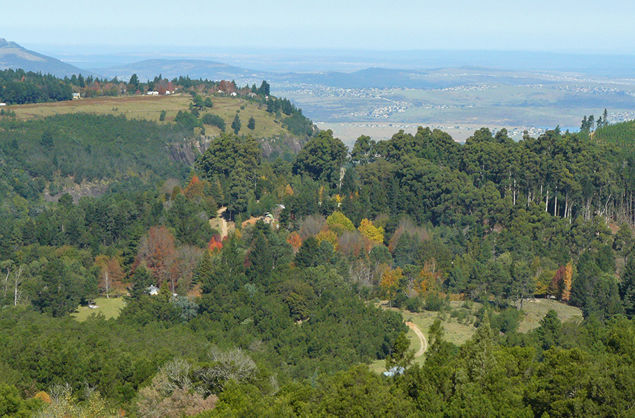 Endless forests, a quaint village atmosphere and looming mountains: Hogsback, in South Africa's Eastern Cape, looks like it belongs in a J.R.R. Tolkien book. It's a perfect weekend escape if you're looking for rustic charm, quiet evenings by the fireside, and days spent exploring the woodlands. Here's what you can see and do in this charming South African village.