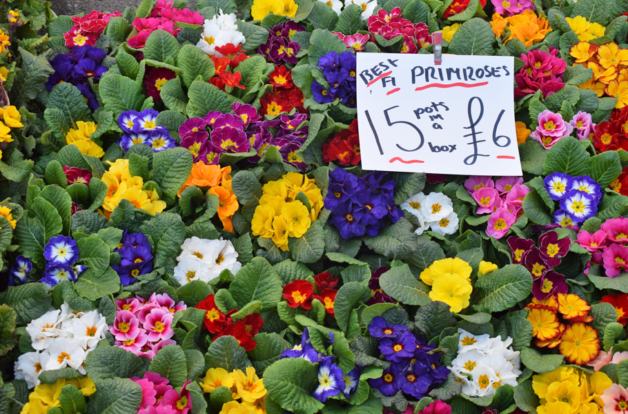 Columbia Road Flower Market London Primroses