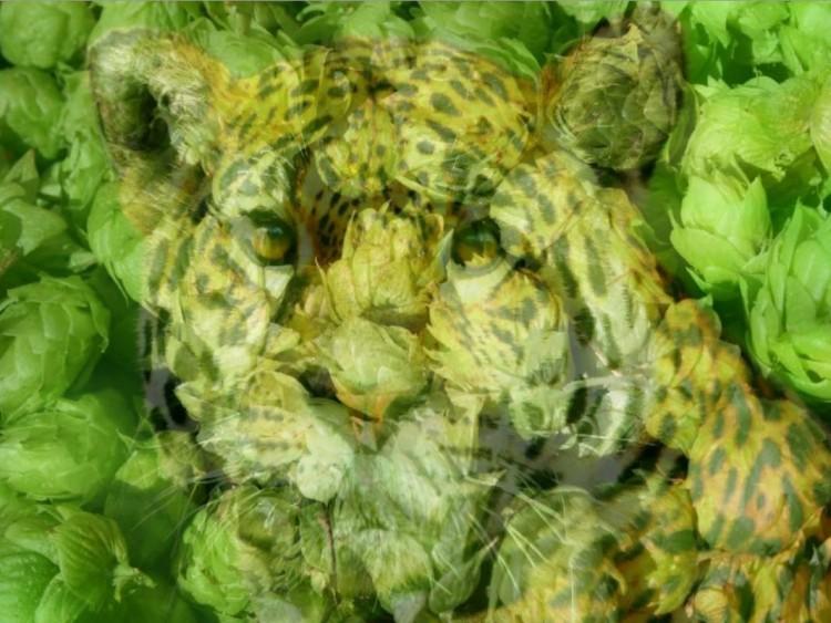 milana-hoppy-jaguar_14944026240833_g.jpg