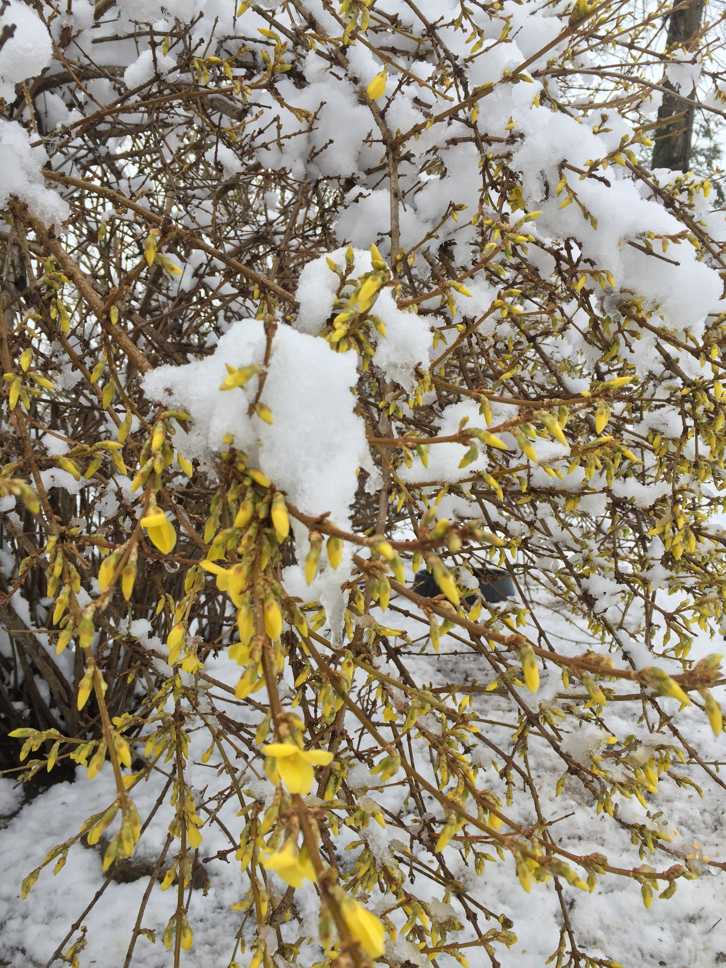 snow_april2.JPG