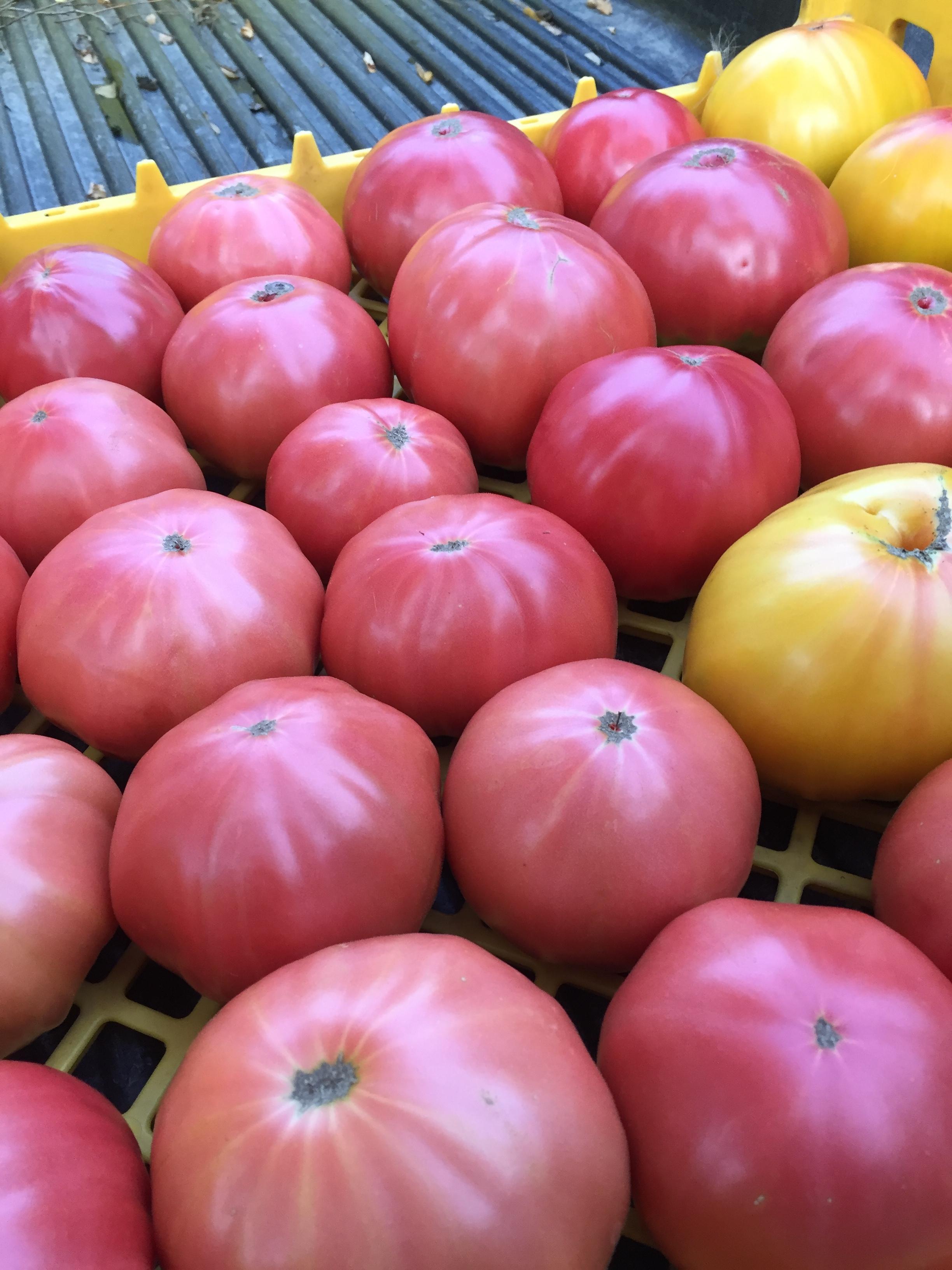 flawless_tomatoes.JPG