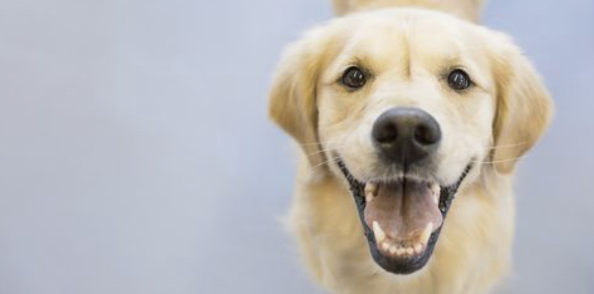 Toxic and Dangerous Foods for Dogs -