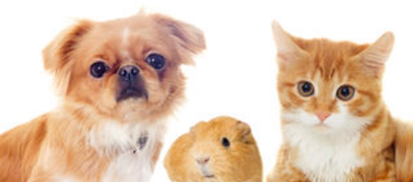 Training your Pets -