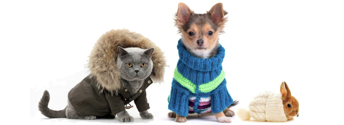 Top 5 Winter Tips for your Pets -
