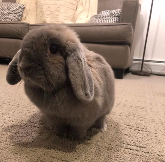 """""""Stephanie, Gabby and Brian - thank you so much for taking great care of our little ones! We LOVE the pics!! we saw the updates and they made us all smile. I really appreciate you giving Bun Bun some play time in the house, she loves it! Thank you!!"""" - -Bun Buns Parents"""