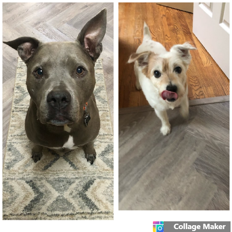 """""""Absolutely the best!!! I love their client portal that sends """"pupdates"""" 😂 with pictures after each visit!"""" - -Mila and Chloe's mom"""