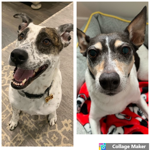 """""""Paw Pals is an amazing company! They have taken great care of or two dogs for several years. They are very reliable, extremely efficient and have a super friendly and caring staff. I highly recommend them to anyone seeking pet services!"""" - -Jackson and Clooney's Dad"""