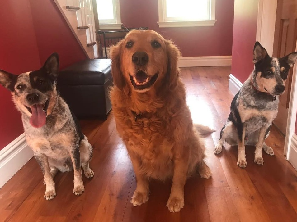 """""""The only folks we would ever trust with our pets. They are awesome!"""" - -Mars, Jupiter, and Buddy's Parents"""