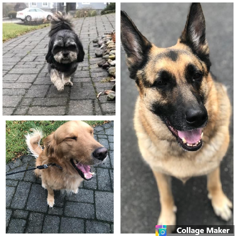 """""""Jenna and Gabby arrived right on time. They greeted my two furry babies who adored them. They asked all the right questions and made me feel very confident that they will take care of them just as I do. Thank you Jenna, Gabby and Paw Pals."""" - -Clark, Bear, and Kingston's Mom"""