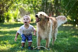 Play Time! - One of the most common reasons for destructive behavior is a lack of exercise or stimulation, especially if your pet has just spent the summer running around and playing with the kids. As a substitute, introducing your pet to new animal friends, training classes, daycare or a pet sitter can be very helpful.