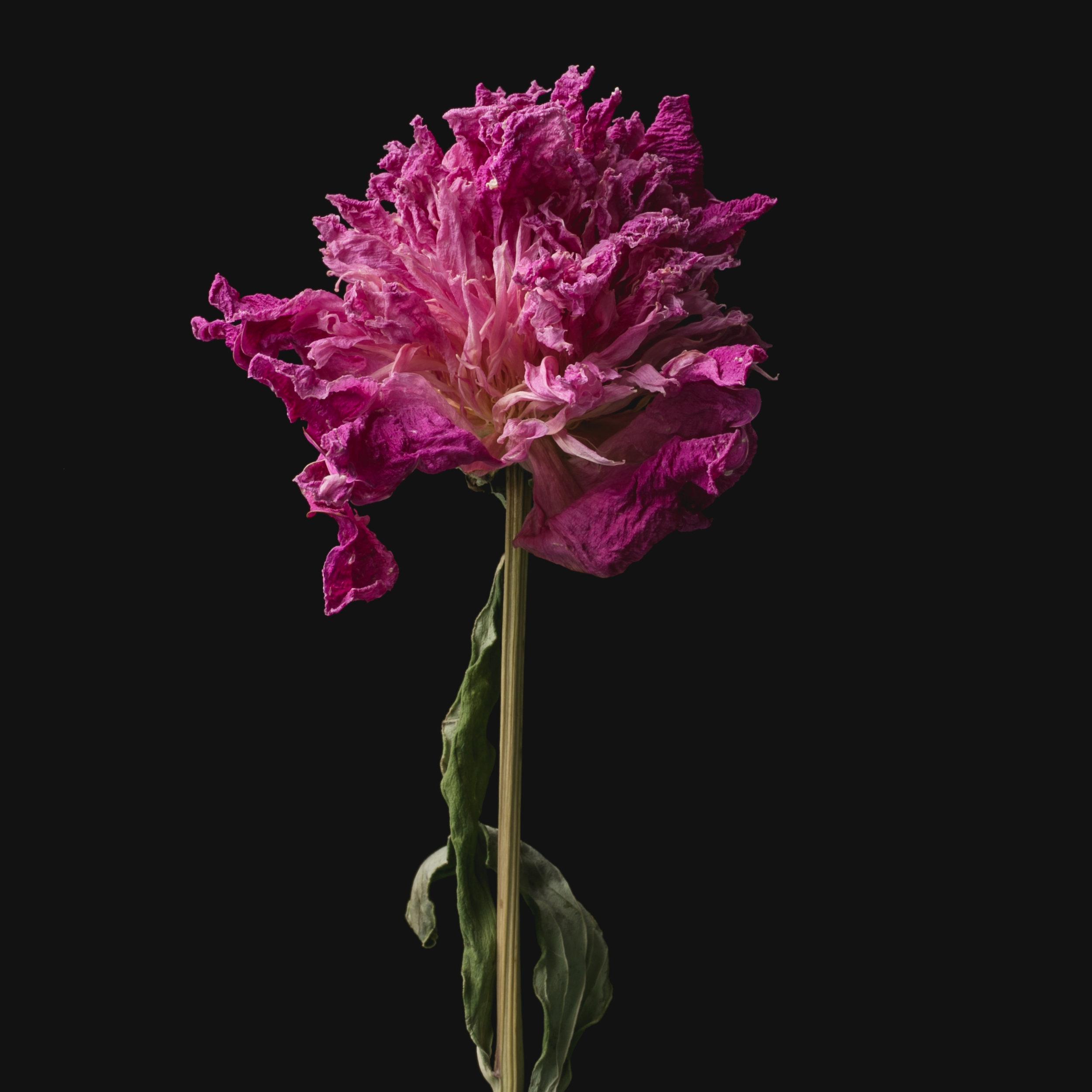 Flowers-062.JPG