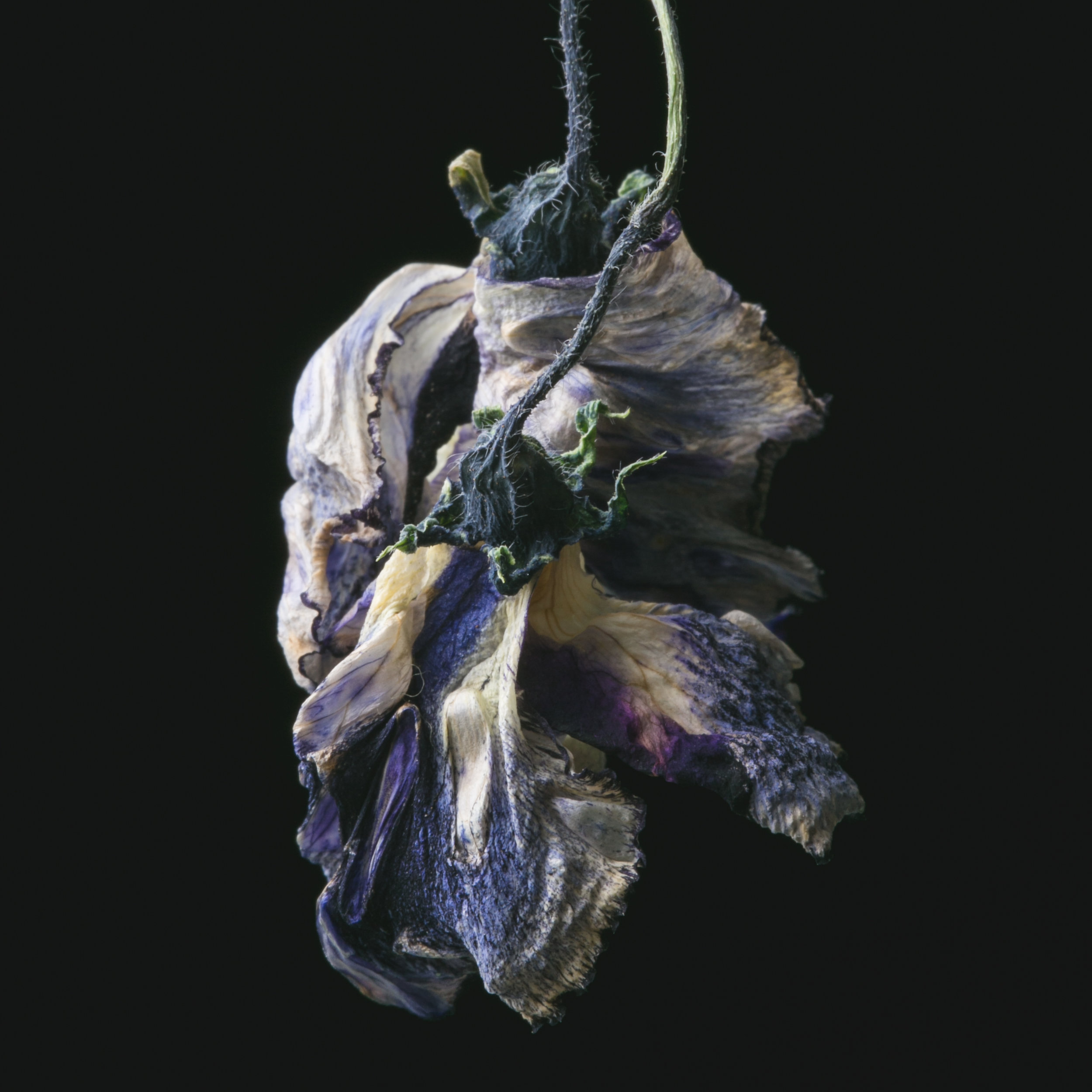 Flowers-117.JPG