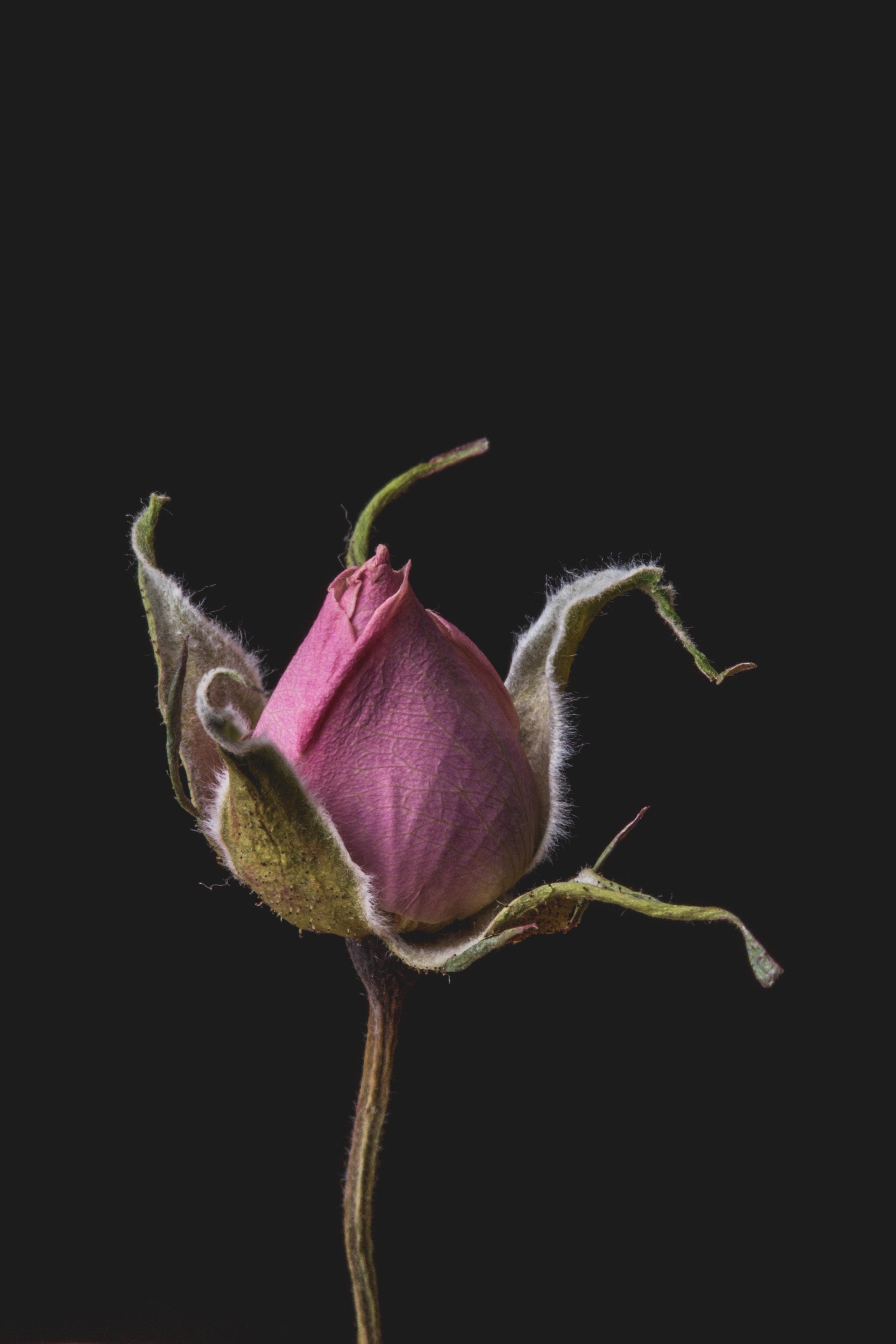 200160408_FLOWERS3408.JPG