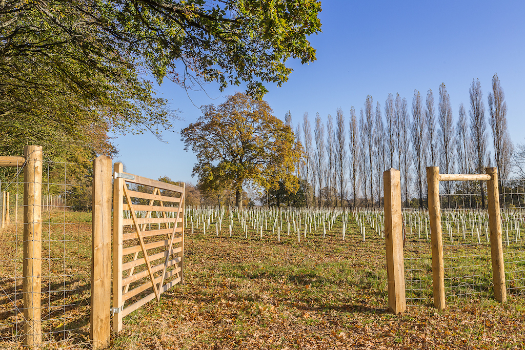 Gate leading into the vineyard