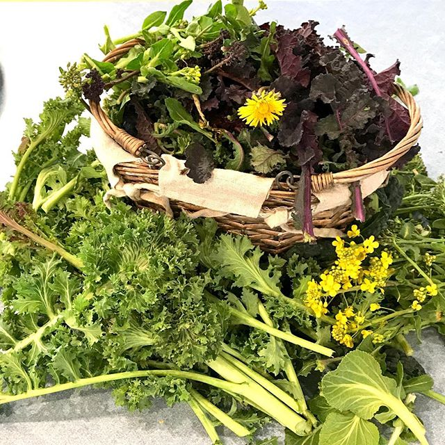 Grateful to and for the plants we are harvesting from our overwintered garden, spring is here! #foodismedicine #gardening #gardenlife #katiekendrick