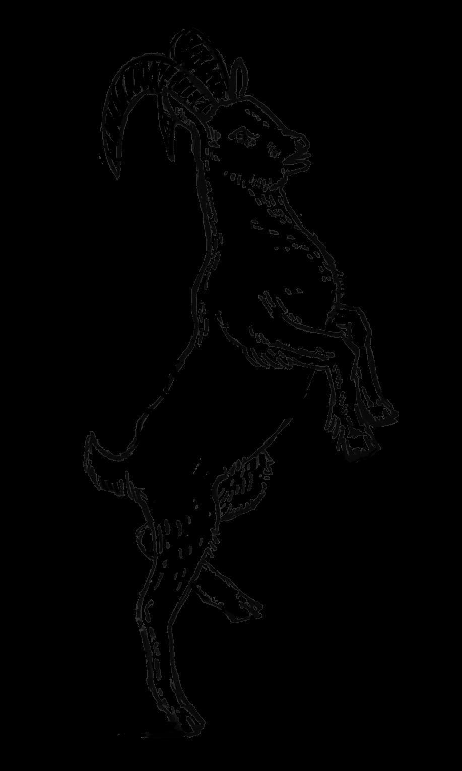 DMO_Illustrations_CincturedGoat.png