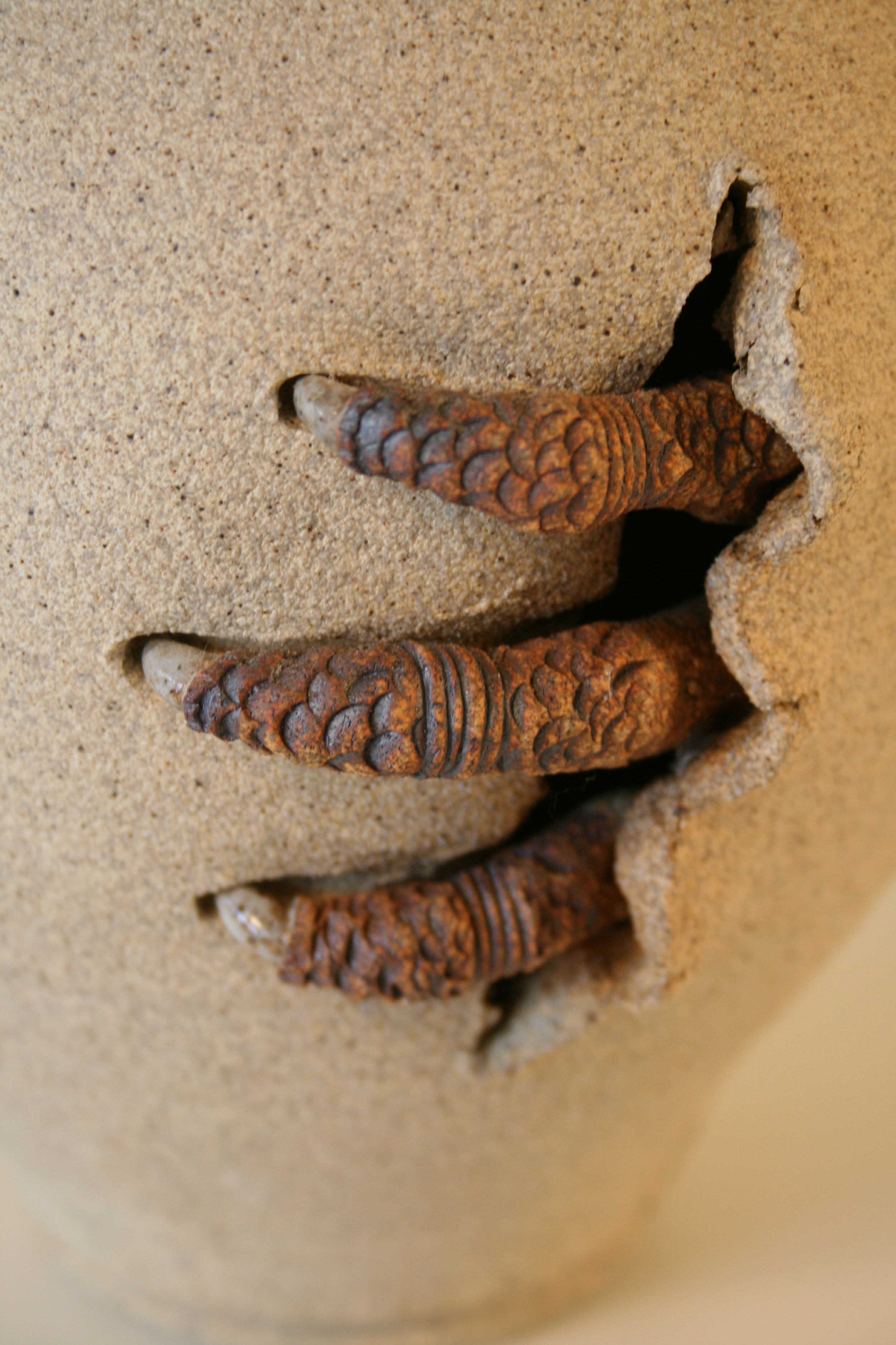 Claw Pot series  Get A Grip  detail.jpg