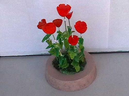 Poppies - by Bill Pop Reynolds.jpg
