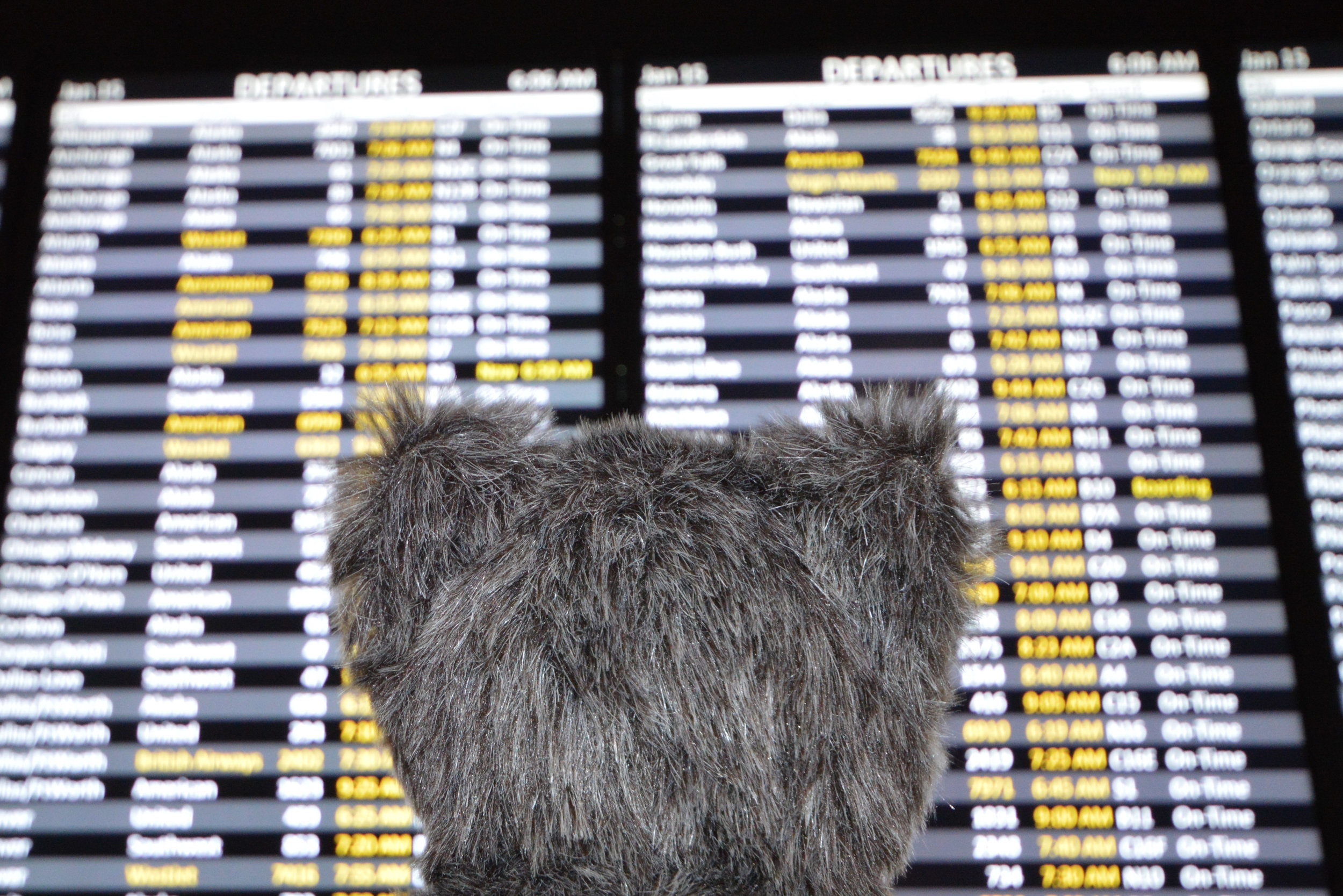 Where's Dash Going Departures.jpg