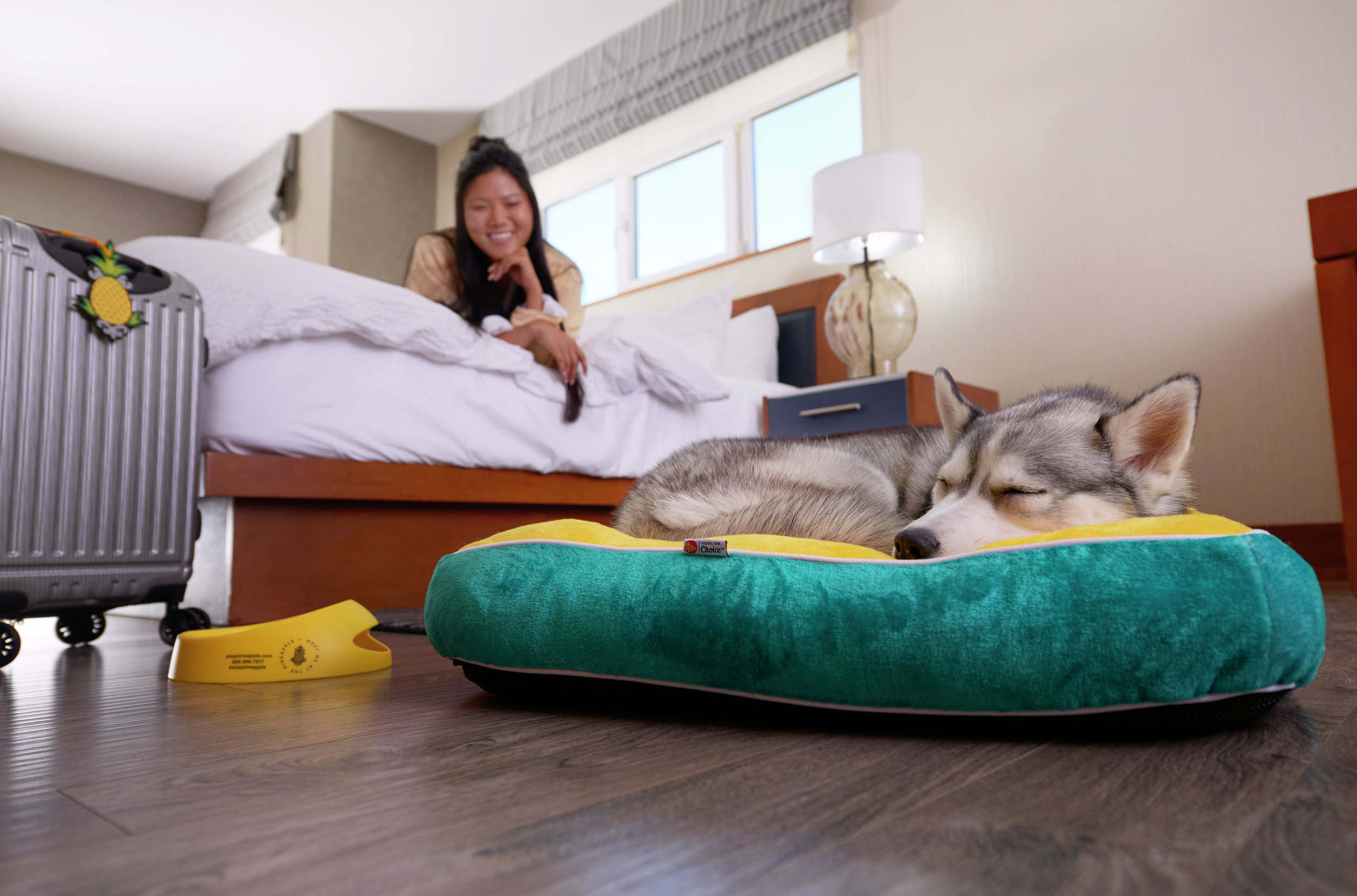 Lifestyle-2017-husky-dog-bed-watertown-room-DSC-1083-3500x2311.jpg