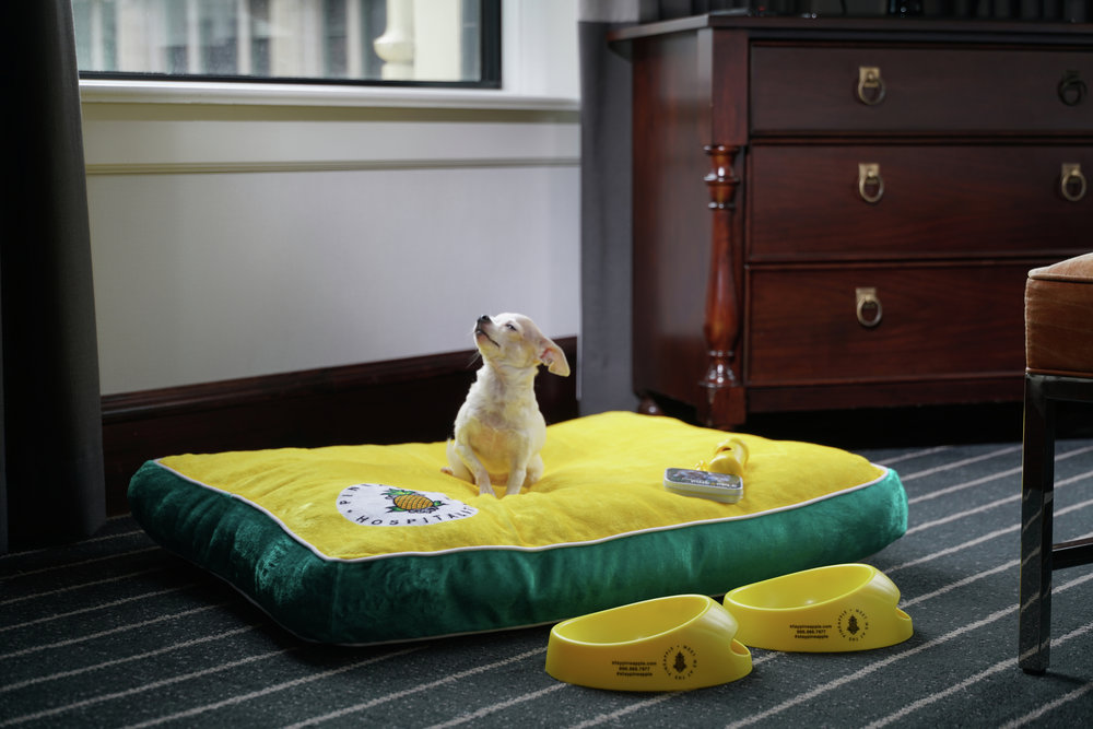 Small chihuahua sitting on custom bed with dog bowls at Staypineapple Hotel in Chicago