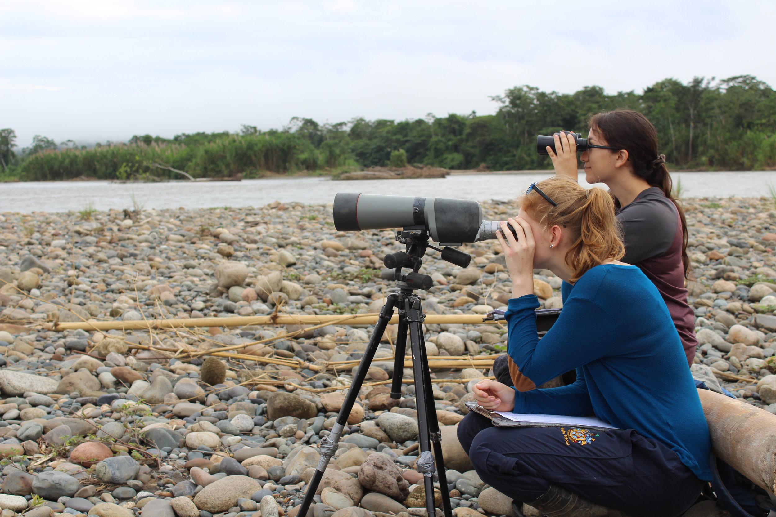 Monitoring the clay lick. Photo credit: Kristi Foster.