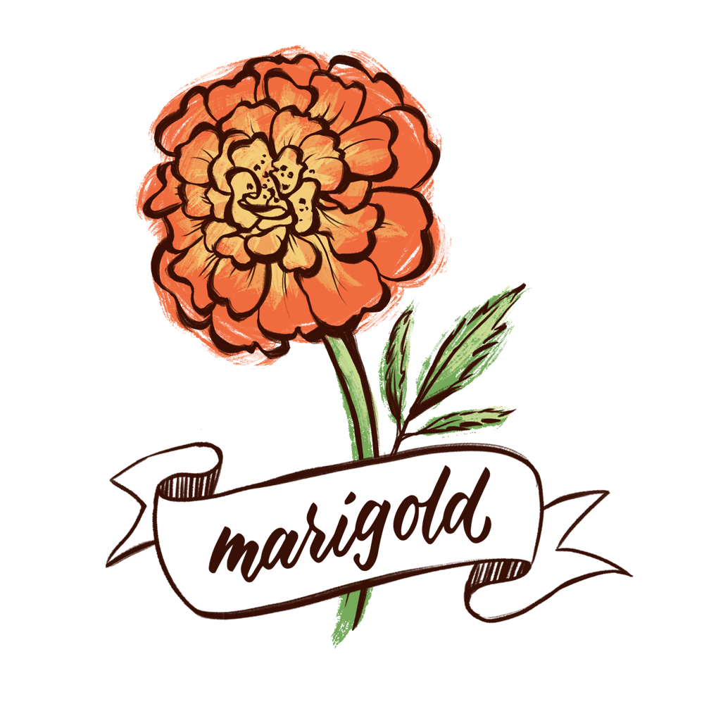 Marigold flower illustration with hand lettering