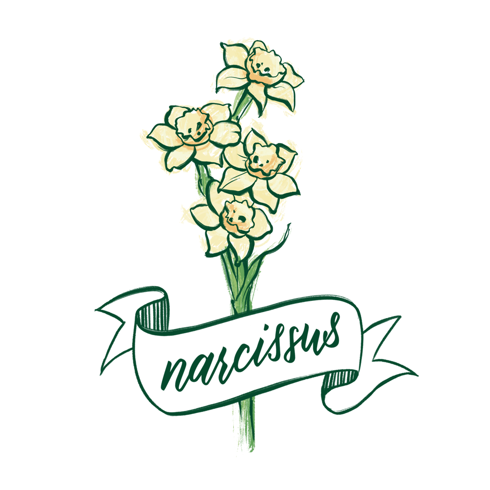 Narcissus flower illustration with hand lettering