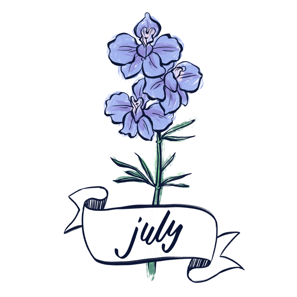 Larkspur flower illustration with hand lettering