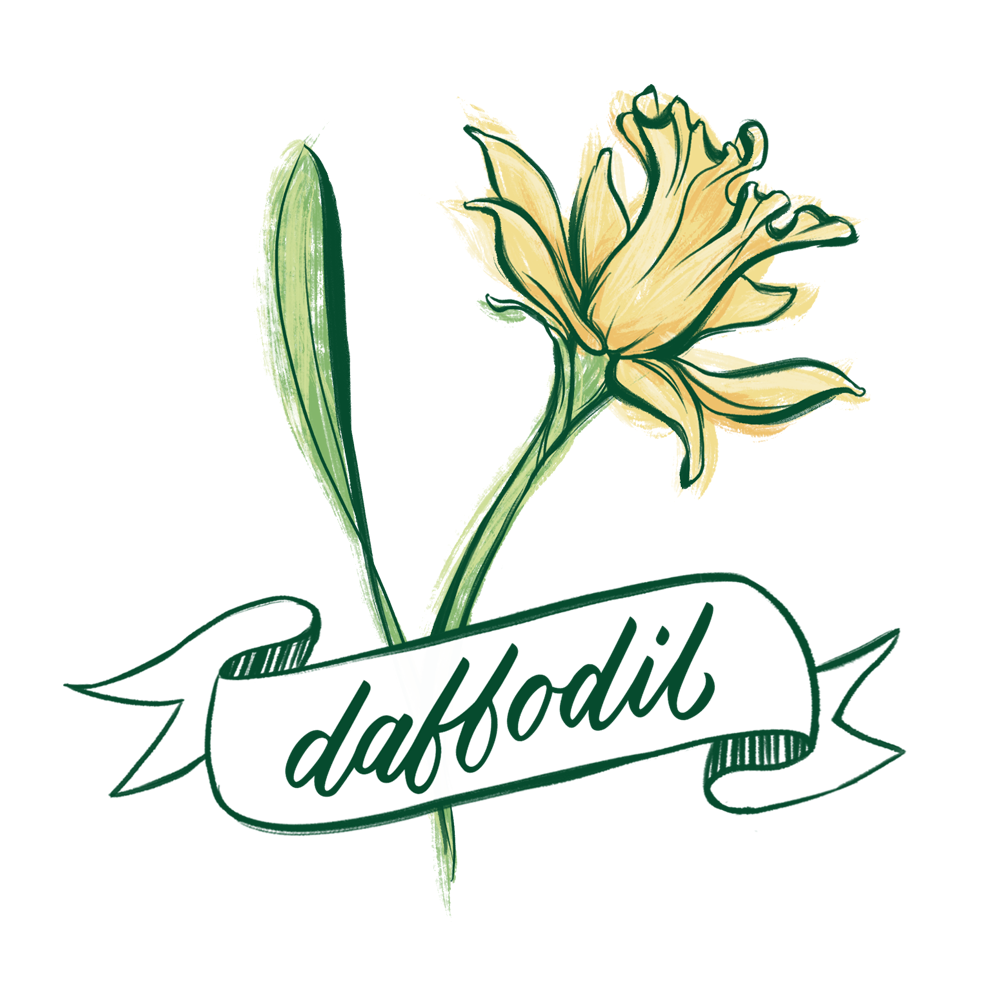 Daffodil flower illustration with hand lettering