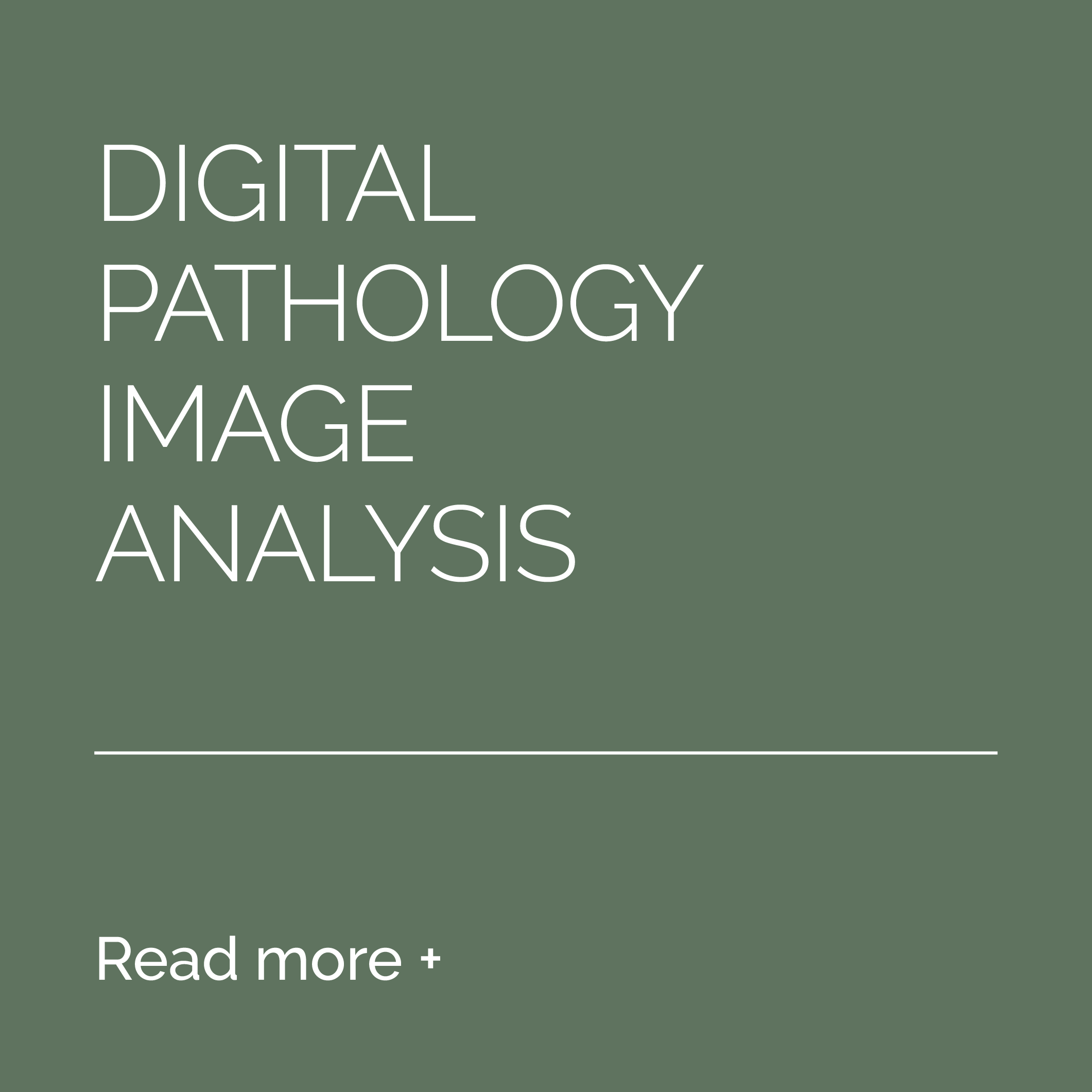 7-Services-Digital-Pathology-Image-Analysis-BEFORE.png