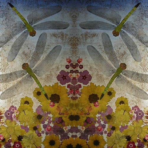 3316_Dragonflies