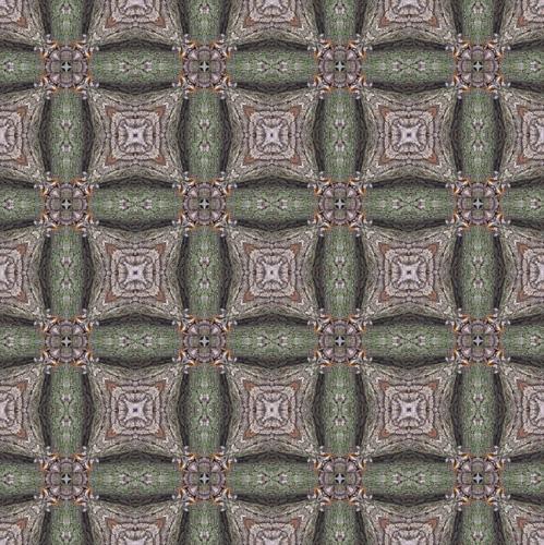 1616_motheroak3_G
