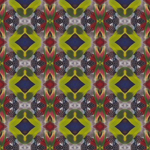 113014_feathers7_G