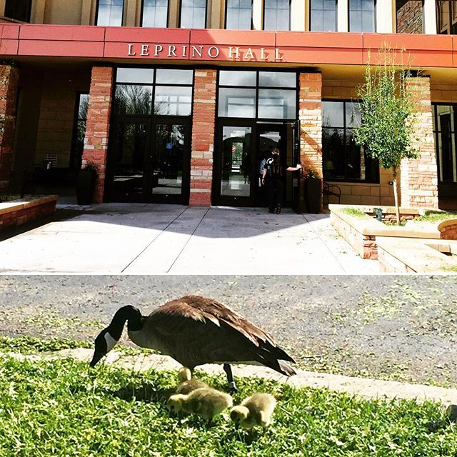 Just completed our final walk through at CCU -- even the baby goslings are getting excited to welcome students here in 6 weeks for #nla2017! #whatmorecanido #heartledleader